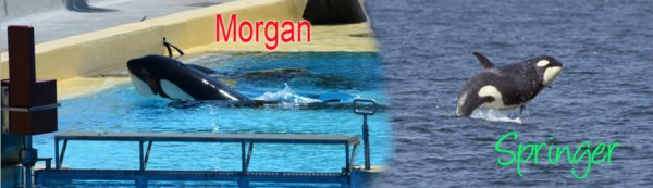 banner-morgan-springer