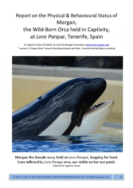 thumbnail of Visser (2012) Report on the Phyisical Status of Morgan-V1.2
