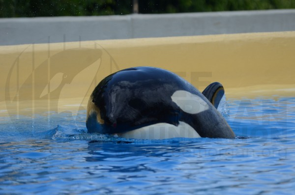 Morgan at Loro Parque