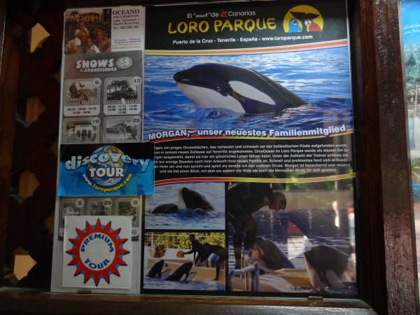 Morgan as the main feature of a commercial advertisement for Loro Parque