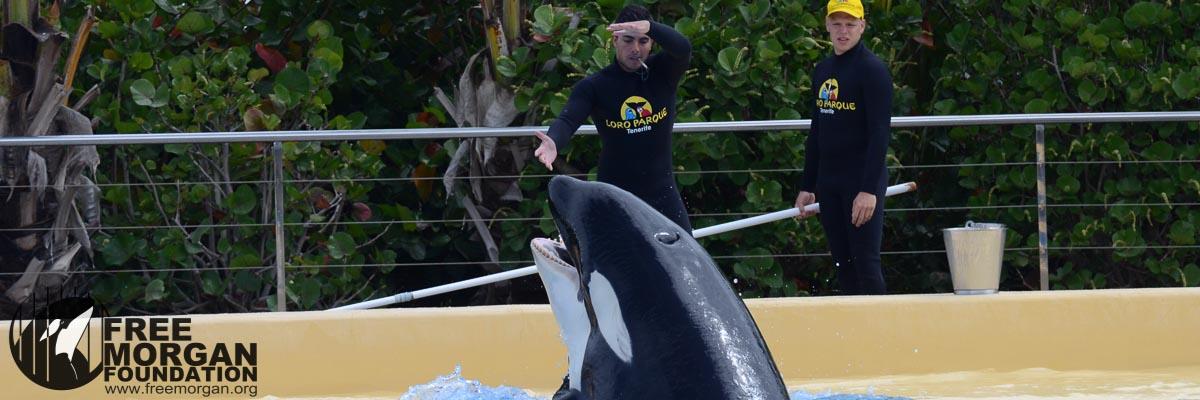 sea lion show it crowd shirt
