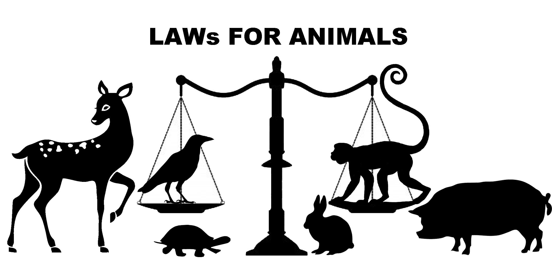 animal-law