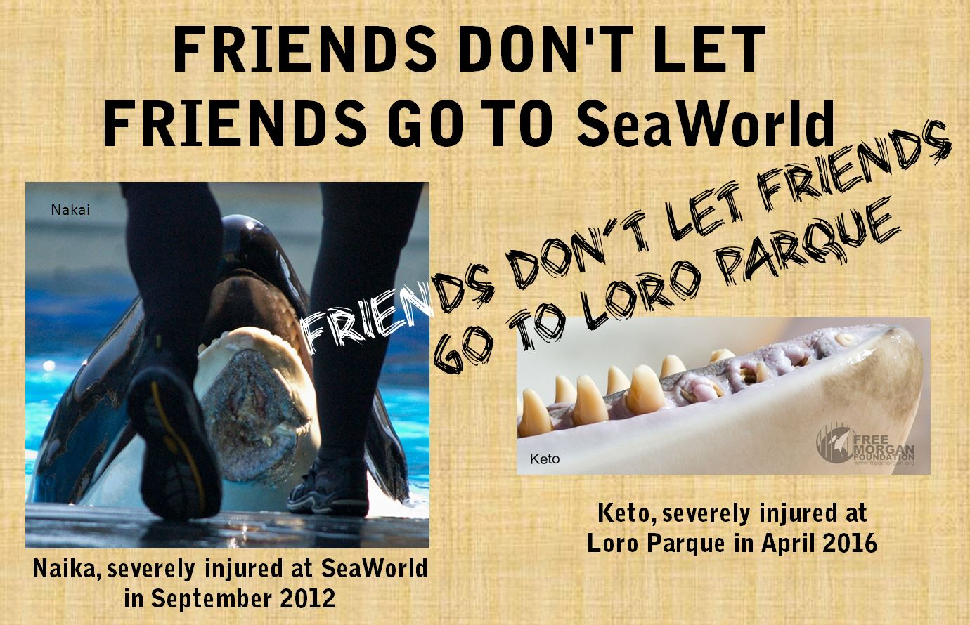 Friends don't let friends go to SeaWorld
