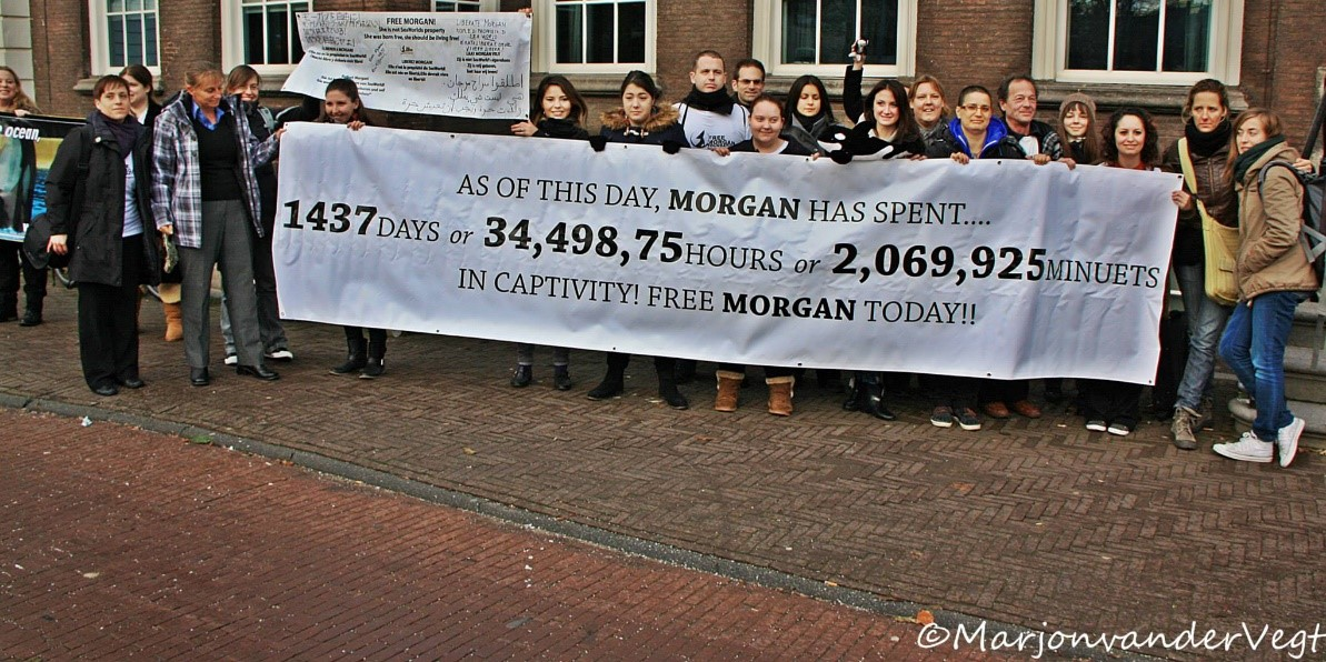 December 2013, banner indicating how much time Morgan has spent in captivity
