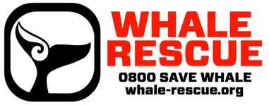 whale_rescue_resize_381_149_100